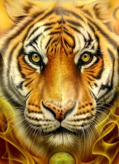 13. Tiger on Can Am hood